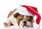Holiday wishes to everyone in Bulldog Nation!