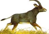 Characteristics of BLuebuck