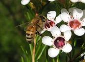 No Pollination....