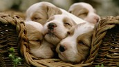 Get Lots Of Rest, Like These Guys!