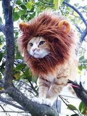 We are Lions hear us roar!