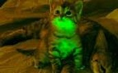 Genetically Modified Cats