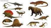 These are some of the animals that you would see.