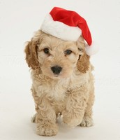 its a doggy