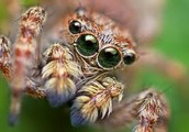 All types of spiders