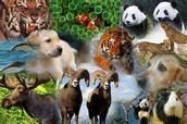 ¿cuales son los animales en peligro de extincion'