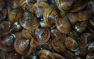 http://www.morguefile.com/archive/#/?q=seafood&sort=pop&photo_lib=morgueFile
