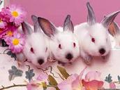 Twins bunny