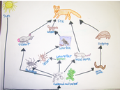 Such a nice food web :-)