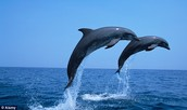What are some interesting facts about dolphins?