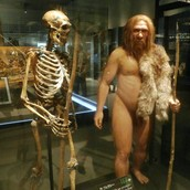 Neanderthal Skelton and Person
