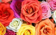 Our Beautiful Roses