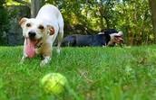Me gustaba jugar con mi perro.