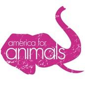 Animals For Animal