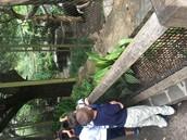 Zoo Trip for Kindergarten