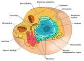 eucariota