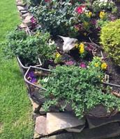 Marlene's Garden