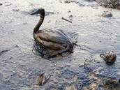 main issues with oil spills