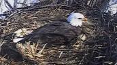 Eagles nests