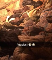 More Puppies!