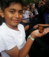 5th graders: Monarch Butterfly Project
