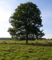Temperature Deciduous Tree