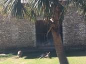 Kangaroo Enclosed