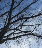...a hawk in a tree.