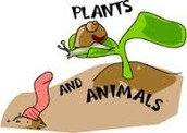 Plant & Animal life in the biosphere