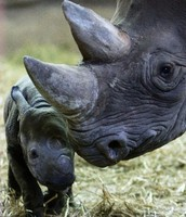 Rhinos are sweet