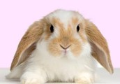 Rabbits are so cute....