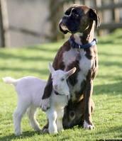 A Kid & Dog