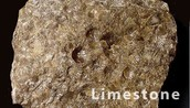 This is a fossil in limestone.