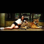 With a big cat called TIGER
