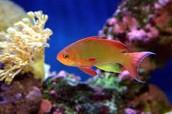 Active fish