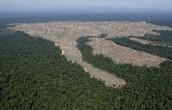 Australia's Deforestation