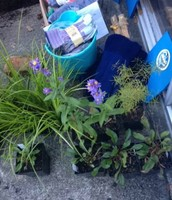 Plants that were brought by citizens to be planted in the rain garden.