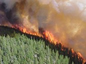 Forest Fires are to Blame