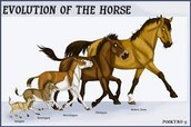 Size scale of the horses.