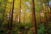 Seemingly Ficticious Forests