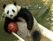 Basketball Bash