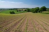 Peasants farmed the land.