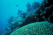 What are two main issues with death of coral reefs?