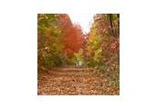 East Texas Forest Trail Region