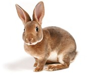 Rabbits/Hares