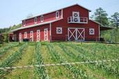 Yo vivíaba en una granja desde el momento en que nací a la edad de 4 años.
