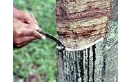 How we get the sap out.