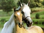 Mama horse and Baby horse