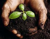 PLANTS & SOILS