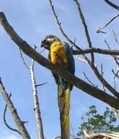 Un Tipo De Pájaro Que Está En El Parque